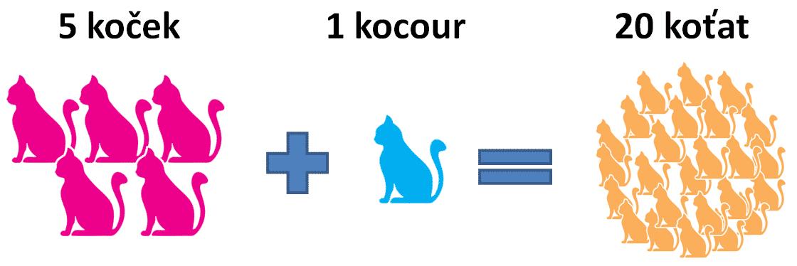 kastrace-kocoura-1