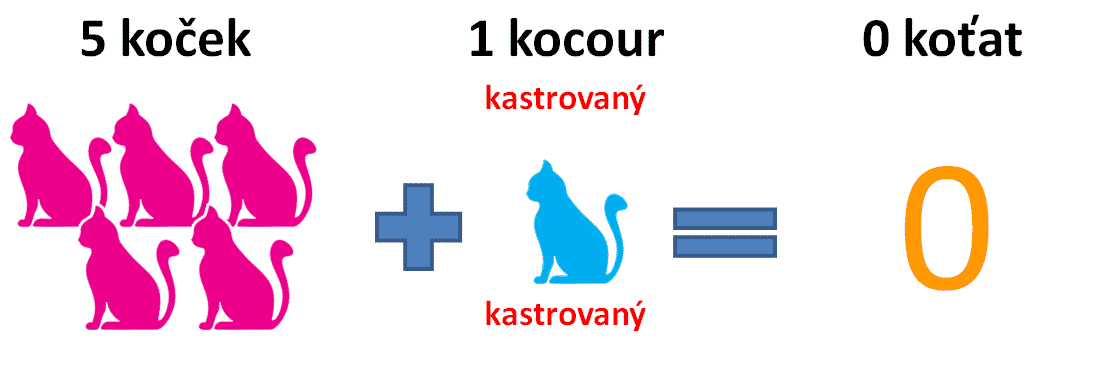 kastrace-kocoura-2
