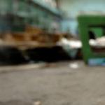 Jak regulovat výskyt toulavých koček?