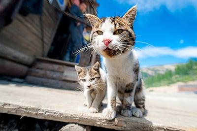 Toulavé kočky