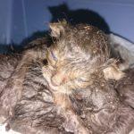 Příběh - Koťata v popelnici
