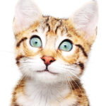 Objednejte si leták - Kastrace koček